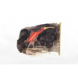 LOUISGRAND Philippe - Ibis